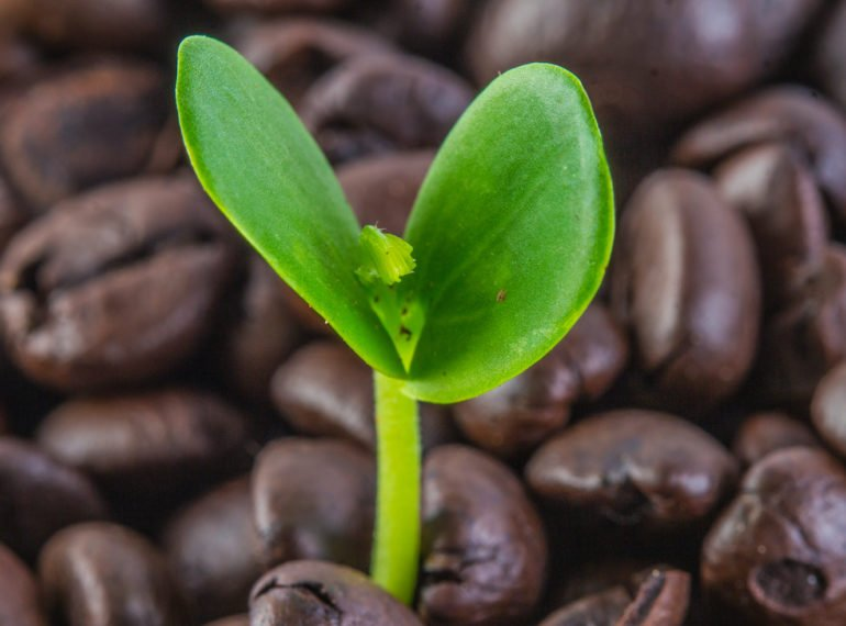 Coffee for your compost